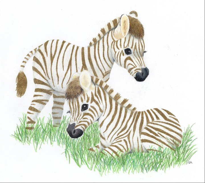 720x643 Baby Zebras By Labcreation