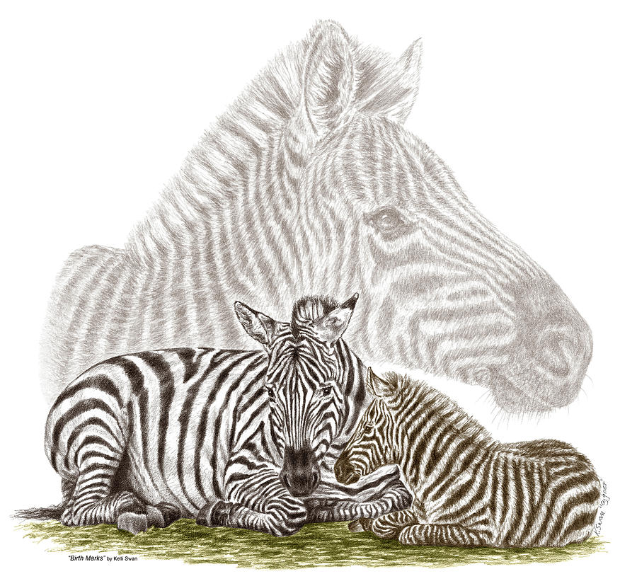 900x828 Mom And Baby Zebra Art Drawing By Kelli Swan