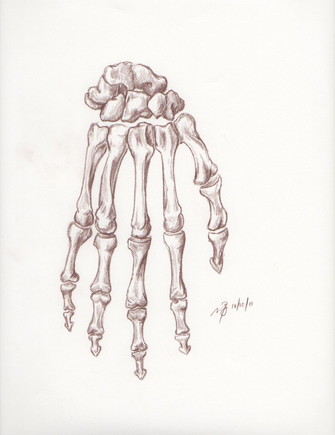 1275x1652 Back Of Hand Drawing Skeletal