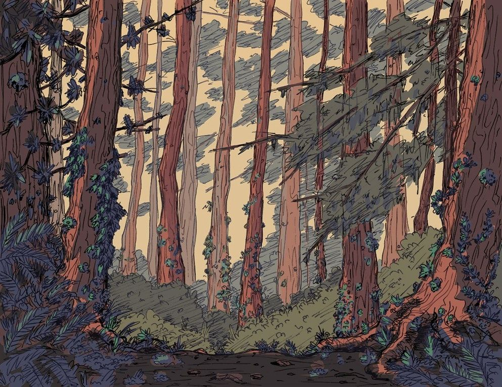 993x767 A Forest Background For A Project I'M Working On Drawing