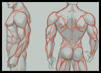 200x144 How To Draw Human Backs Shoulders With Drawing Tutorials