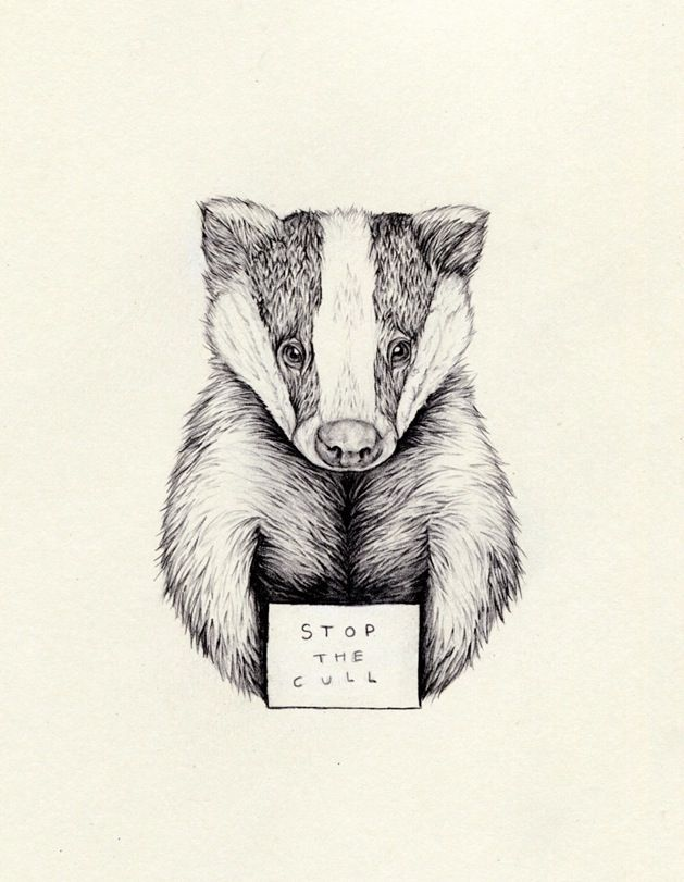629x811 14 Best Badger Tattoos Images On Badger Tattoo, Honey