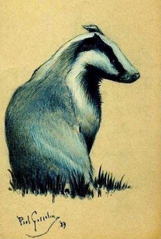 323x480 All Things Badger Badgers Pastel Drawing, Drawings