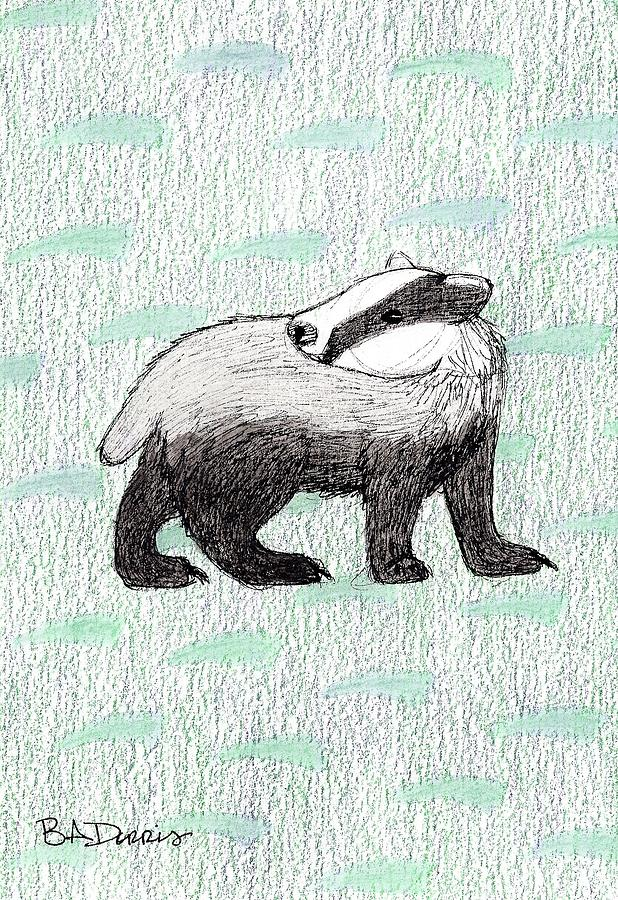 618x900 Badger Drawing By Brittany Dorris
