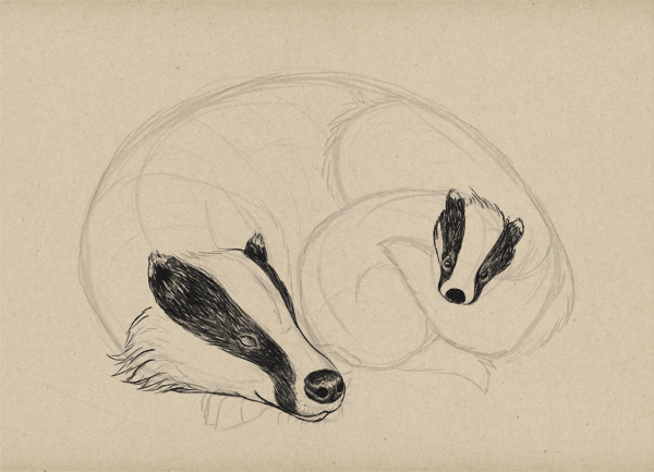 600x433 Draw A Cute Badger Scene Step By Step