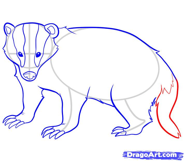 710x622 Step 7. How To Draw A Badger Badgers