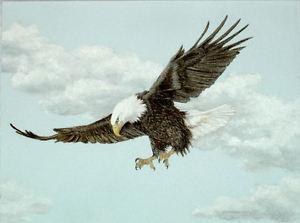 300x223 Original Pastel Drawing American Bald Eagle Flying Sally Porter