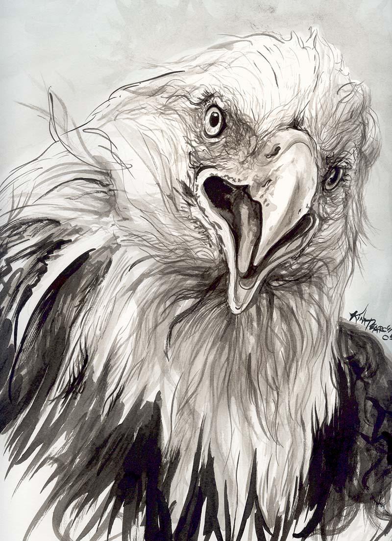 800x1103 Eagle Head Ink Kim Pearce Paintings Amp Drawings