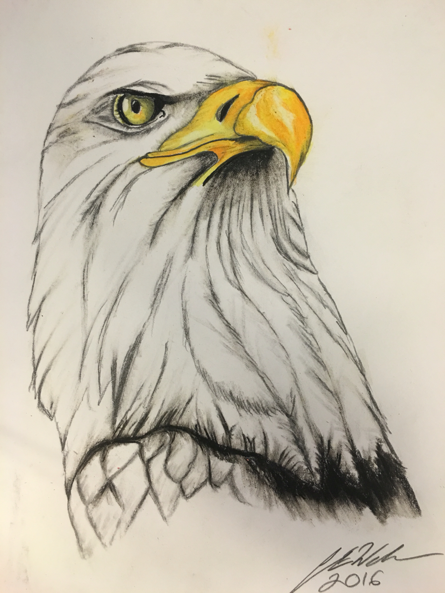 1500x2000 Bald Eagle Art Bald Eagle And Drawings