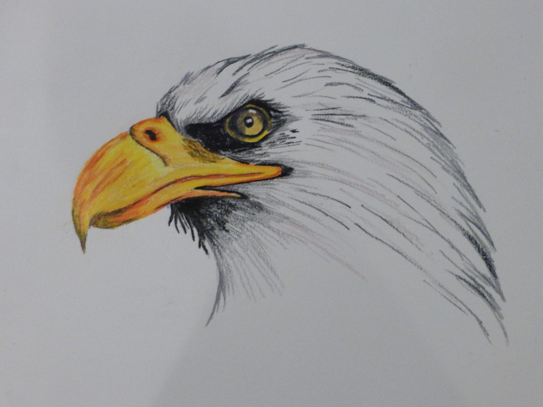 1500x1125 Bald Eagle Colored Pencil Drawing Print