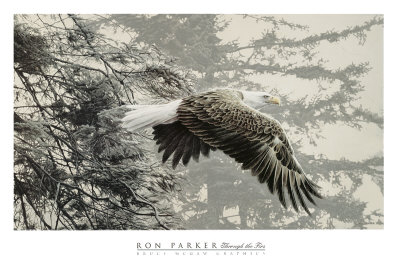 400x267 Bald Eagle Drawings