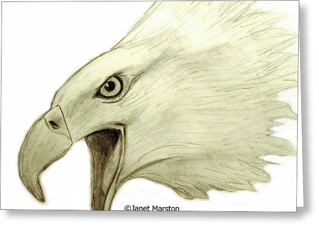 646x470 Bald Eagle Pencil Drawing Drawing By Janet Marston