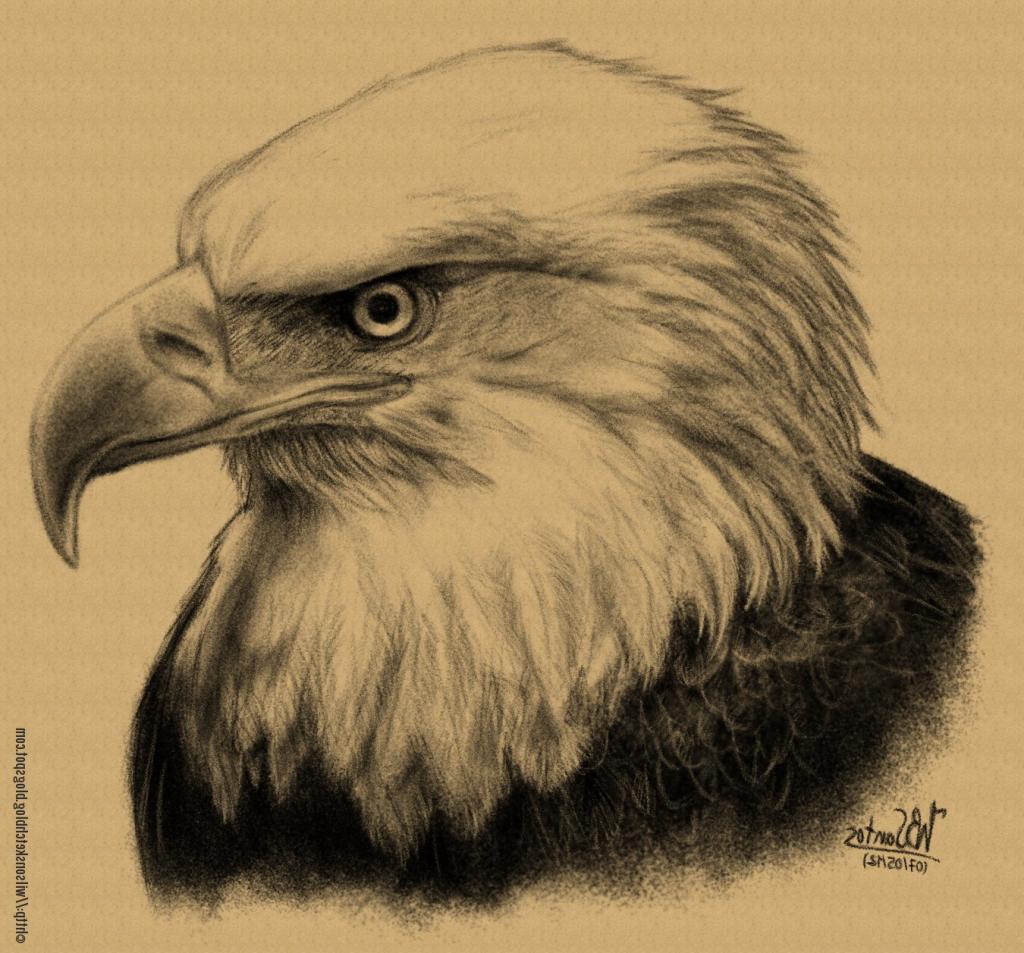 1024x953 Bald Eagle Pencil Drawings