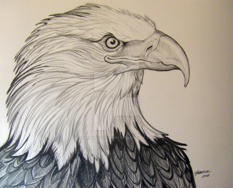 800x643 Eagle 5 Pencil Rendering By HouseofChabrier On DeviantArt