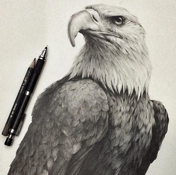 587x584 Stunning Animals Realistic Pencil Drawing Jonathan Martinez