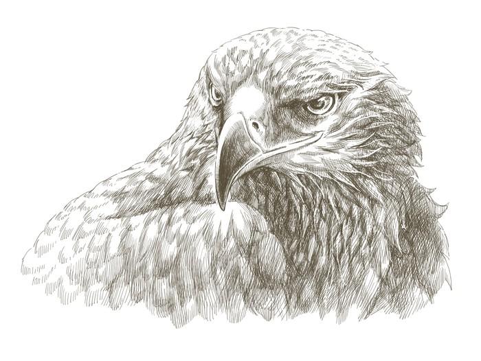 700x526 Eagle Pencil Drawing Line Art Canvas Print We Live