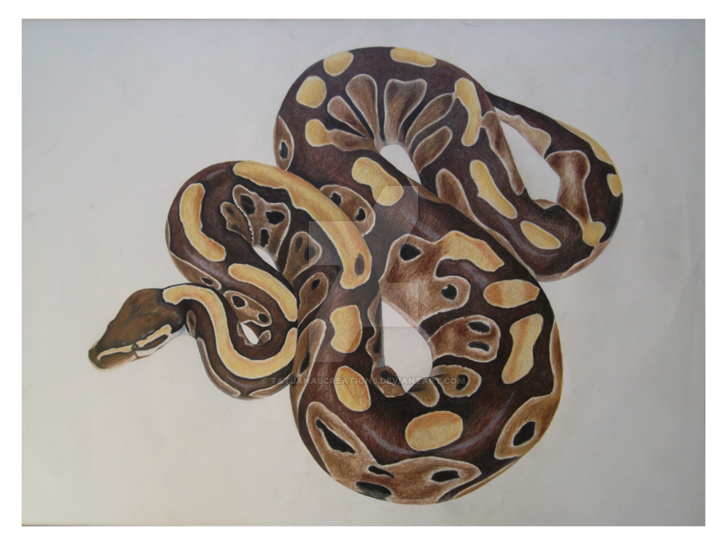 Drawing Lines Using Python : Ball python drawing at getdrawings free for personal
