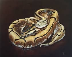 252x200 Image Result For Python Drawing Art Ideas Python