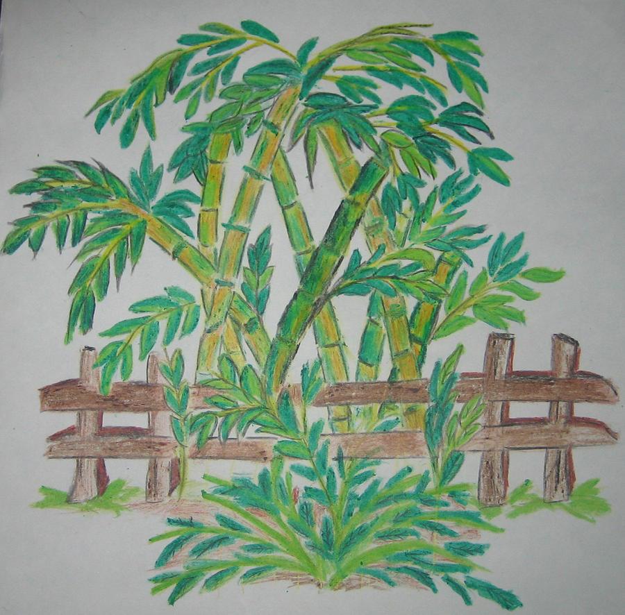 900x886 Bamboo Drawing By Deepa Padmanabhan