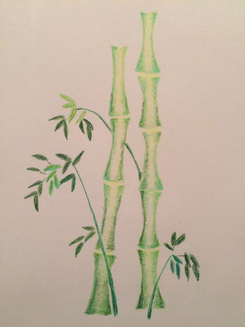 852x1136 Bamboo In Colour Pencil Drawing Mixed Media