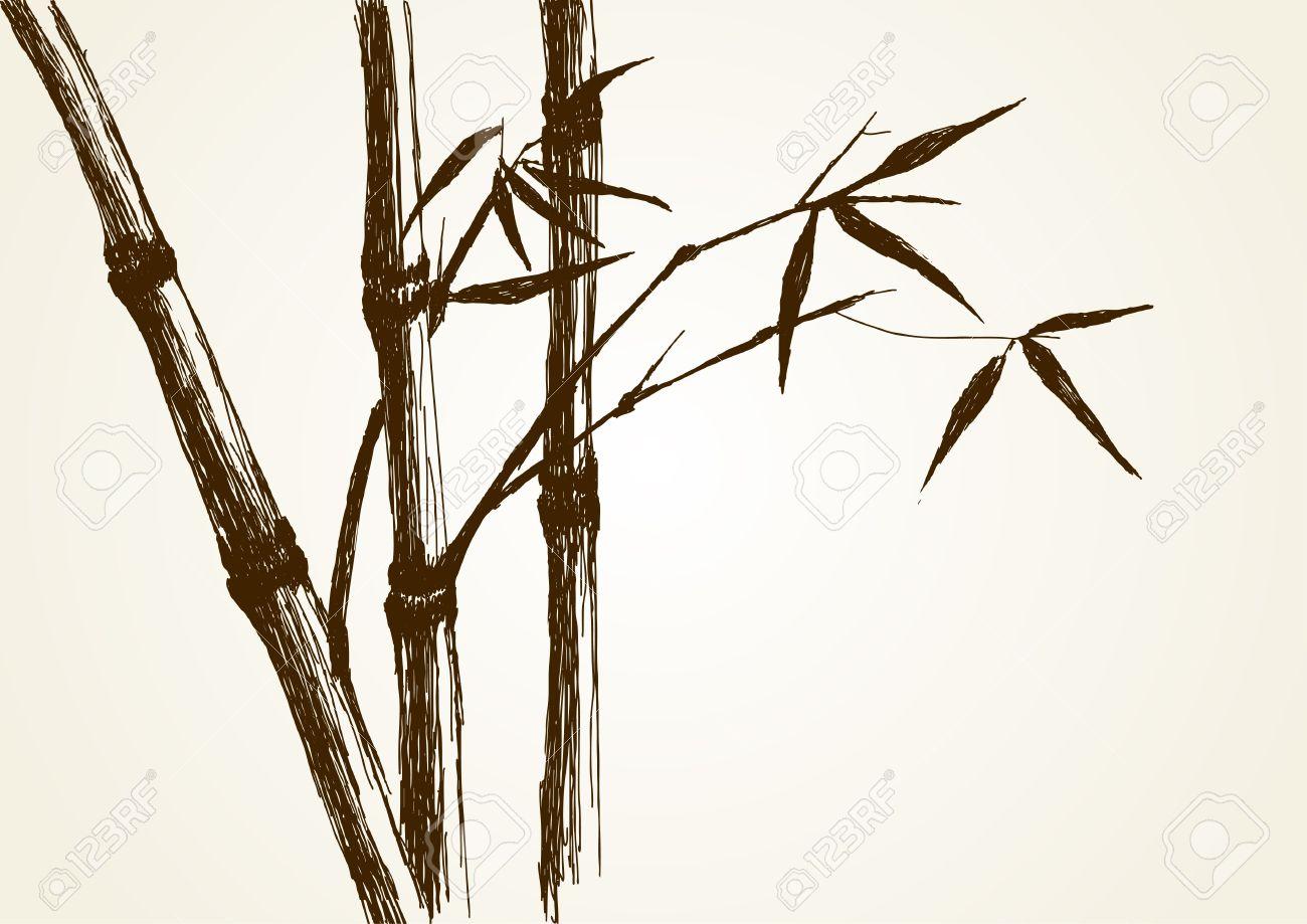 1300x919 Sketch Illustration Of Bamboo Tree Royalty Free Cliparts, Vectors