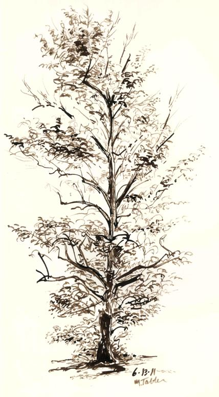 428x777 Tree Sketch With Homemade Bamboo Pens