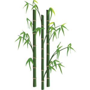 300x300 Bamboo 1 Grassesherbaceous Plants Vector Illustrationdrawing