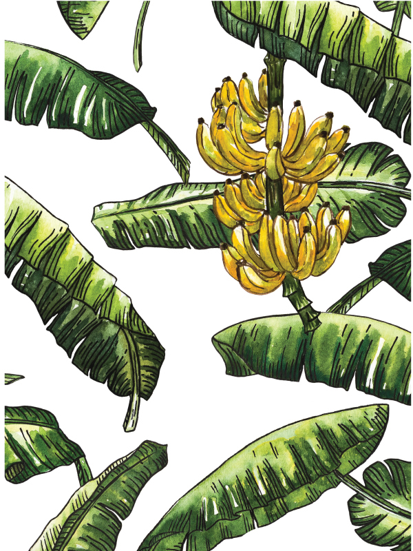 600x800 Banana Leaves With Banana Fruit Watercolor On Behance