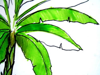 350x263 How To Draw A Banana Plant