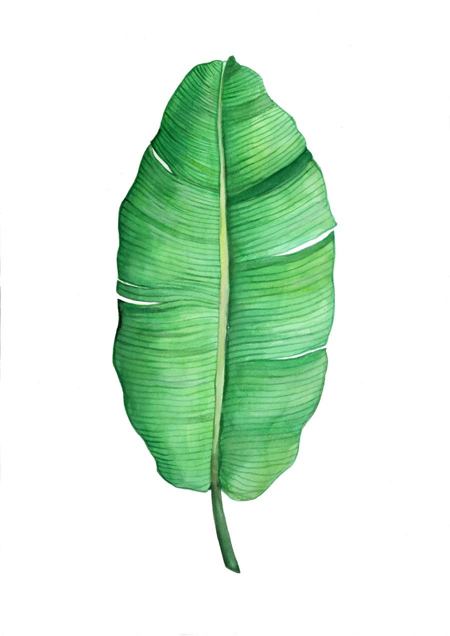 900x1273 Prints Banana Leaves, Prints And Botanical Illustration