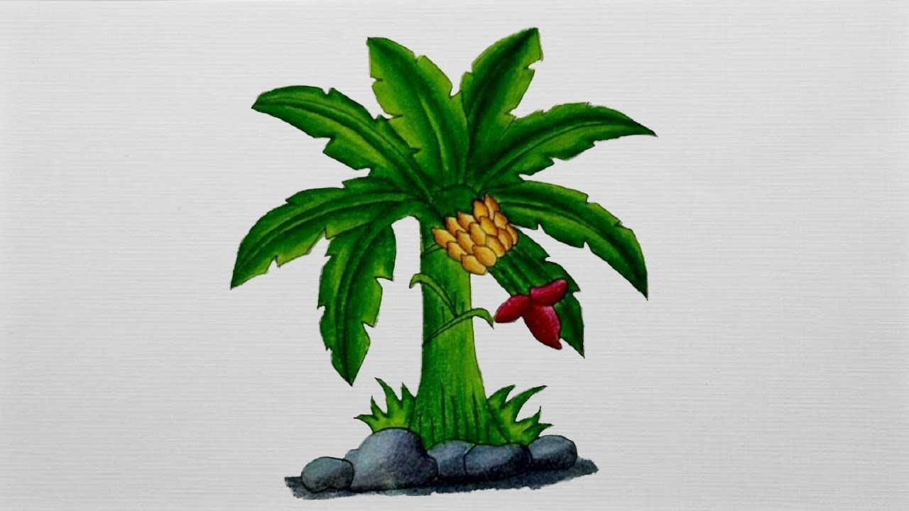 1280x720 Banana Tree Drawing How To Draw Banana Tree Realistic Banana