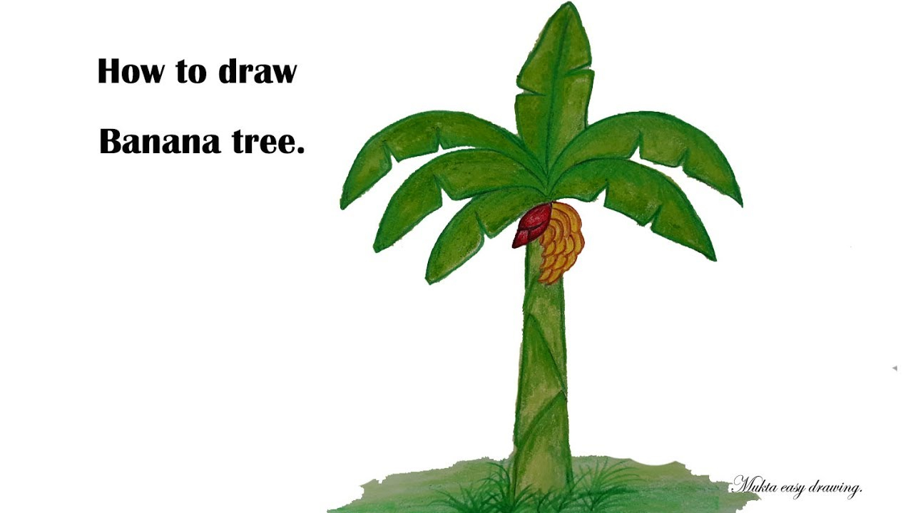 Banana Tree Drawing at GetDrawings.com | Free for personal use ...