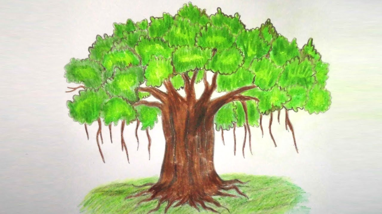 Banyan Tree Drawing at GetDrawings.com | Free for personal use ...