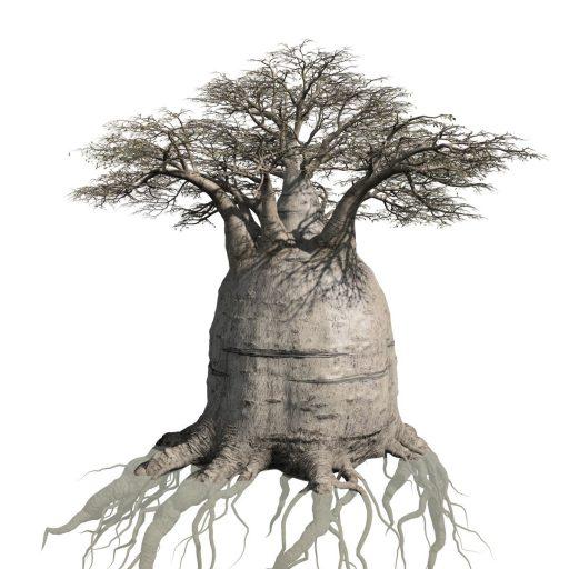 512x512 Baobab Field (Australian)