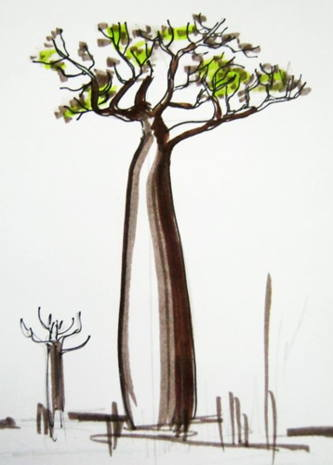 333x465 How To Draw A Baobab Tree