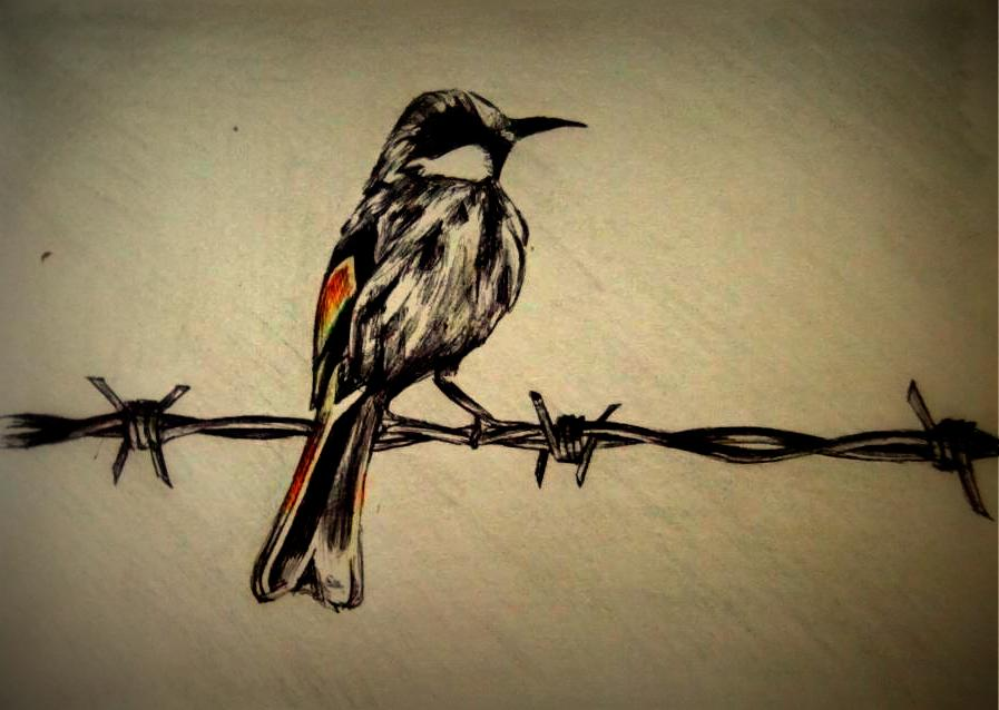 897x638 Bird A Barbed Wire Fence By Nrobinson00