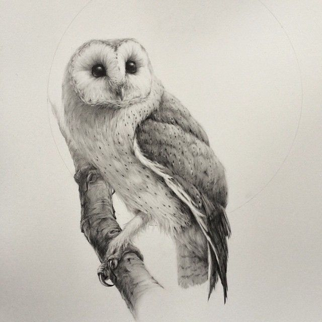 640x640 Blood Milk. Absolutely Stunning Barn Owl Drawing From Artist