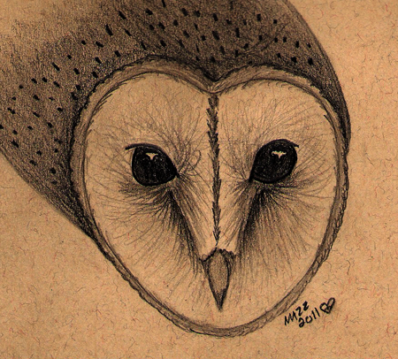 450x406 Barn Owl Face By Tornfeathers