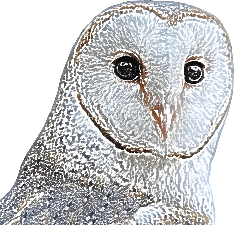 800x769 Barn Owl Face Digital Drawing 2 Stickers By Quentinjlang Redbubble