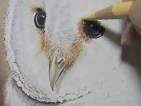 480x360 Pastel Painting Demonstration Barn Owl By Roby Baer Psa (Condensed