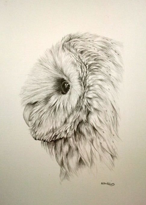 485x680 Pin By Ellen Bounds On Owl Sketches Owl Sketch