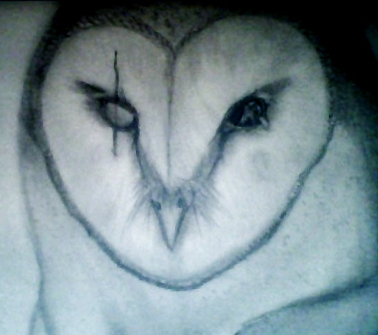 542x480 Scarred Barn Owl By Deltair