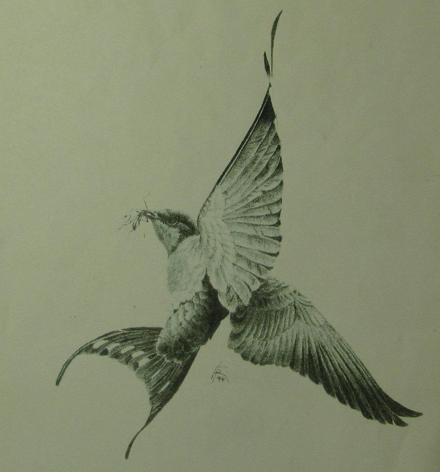 862x926 Barn Swallow By Fkwalcher
