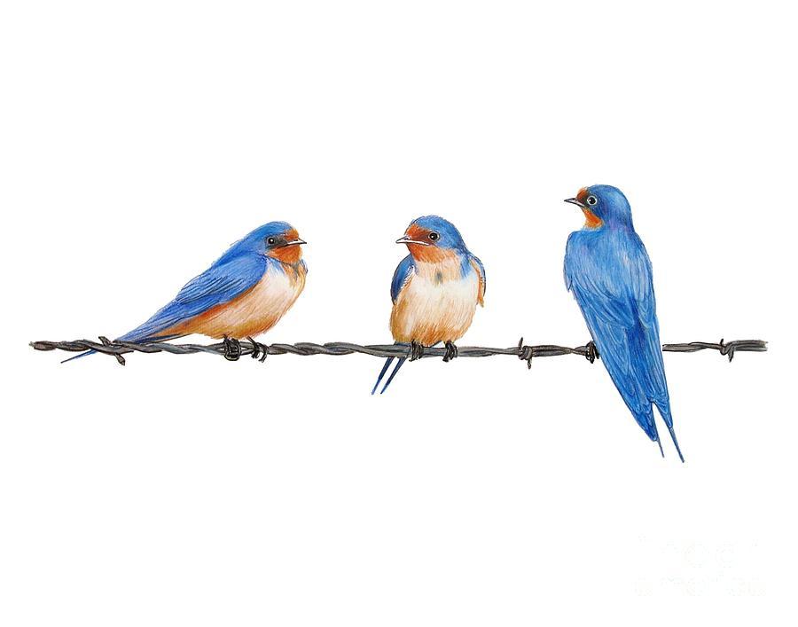 900x707 Barn Swallows Drawing By Carol Veiga