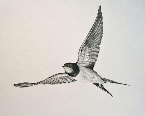 500x400 Barn Swallow Tattoo Ile Ilgili Sonucu
