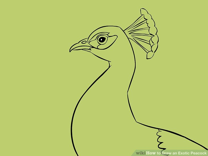 728x546 4 Ways To Draw An Exotic Peacock