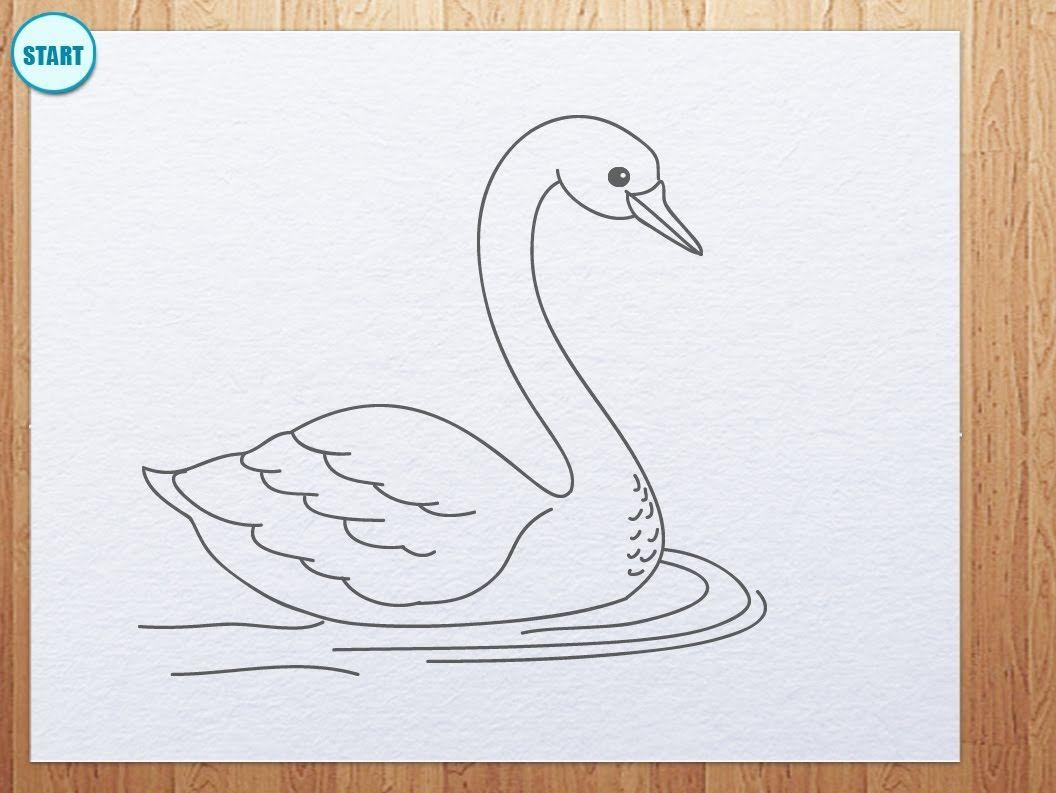1056x793 Swan Drawing Maxresdefault.jpg Something To Draw