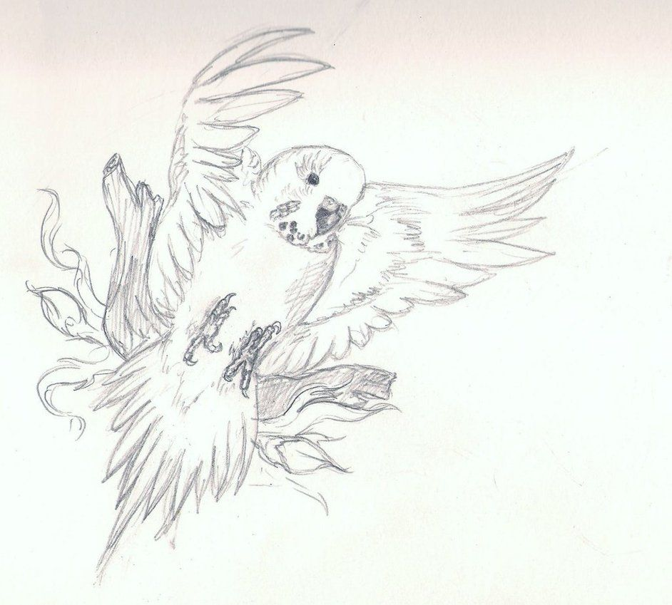 942x849 Very Basic Budgie Drawing Feather And Birds