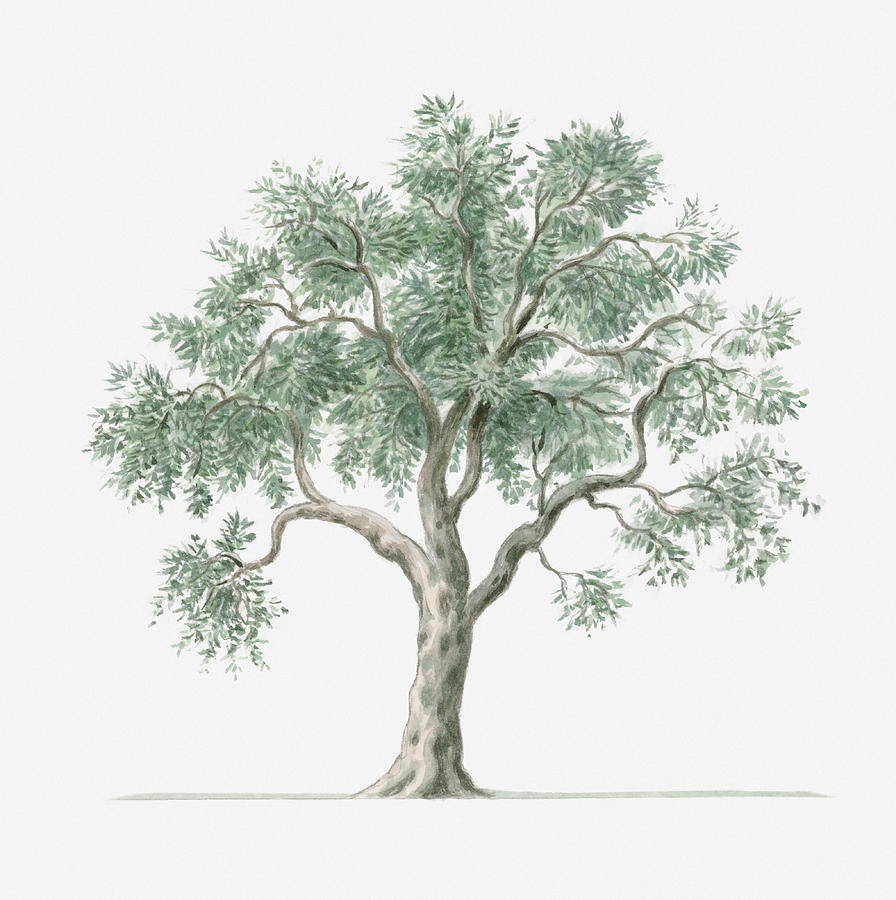 Basic Tree Drawing at GetDrawings.com | Free for personal use Basic ...