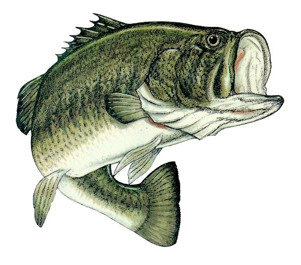 600x530 Best Fish Recipes Cod Fish Recipes, Bass And Markers